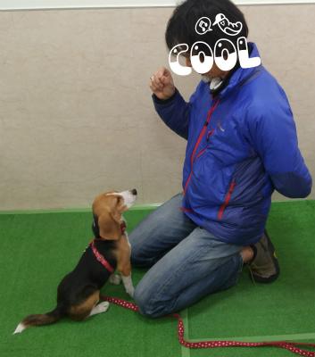横浜の愛犬のしつけ方教室/なな-アイコンタクト-