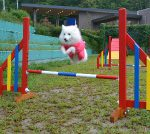 jump-3