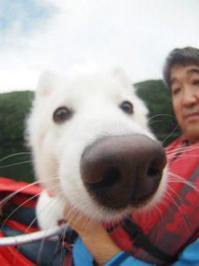 四尾連湖カヤックひといき荘2