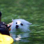 四尾連湖カヤックスピカ泳ぐ